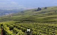 Vous visitez la région ? Nous vous amenons sur les sites de champagne à ne pas manquer. © 2016 Carine Charlier / www.clic-et-plume.com